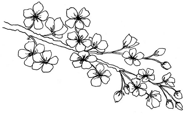 600x373 Beccy's Place Blossom Branch