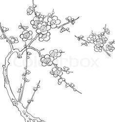 236x250 Cherry Blossom Tree Drawing Beauty, Strength, And Grace Even