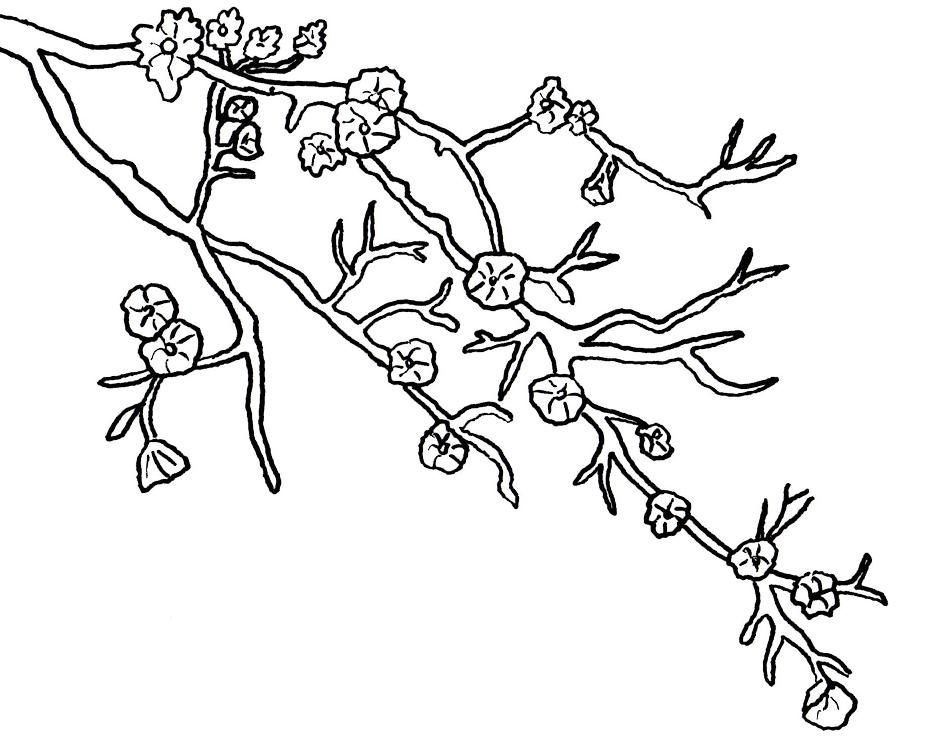 Cherry blossom tree drawing at free for for Cherry blossom tree coloring page
