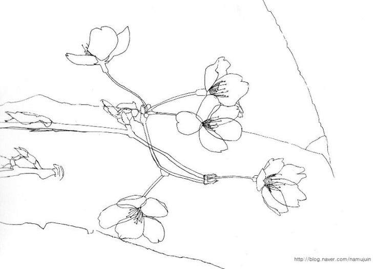 Cherry Blossom Tree Drawing Step By Step