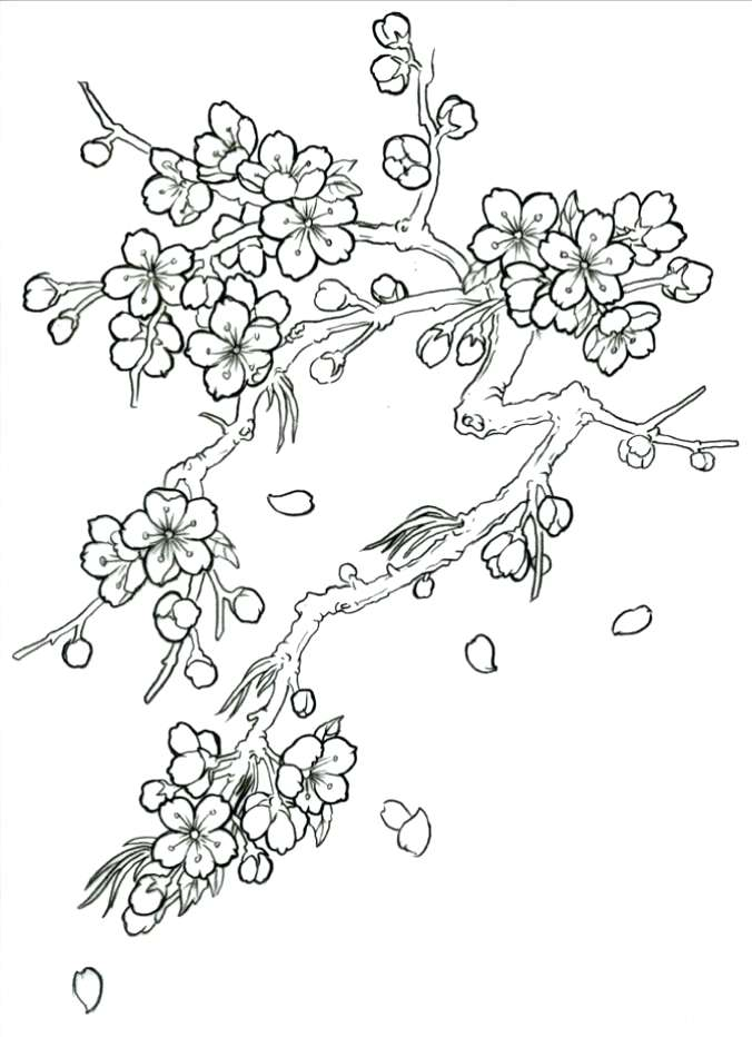 Cherry Blossom Tree Drawing Step By Step at GetDrawings ...