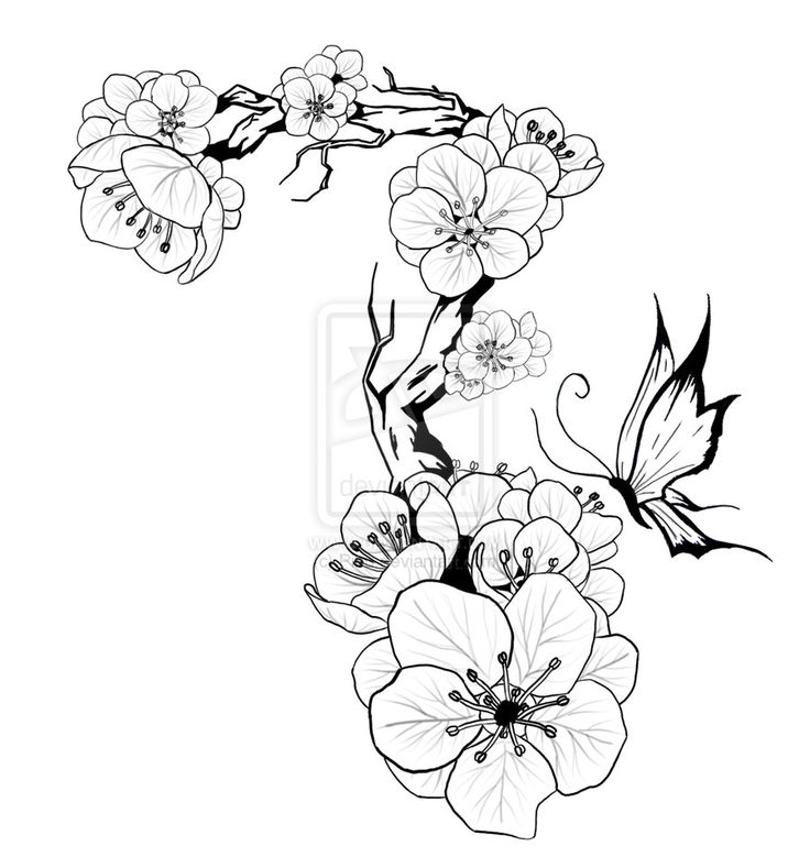 736x779 Collection Of Cherry Blossom Branch Tattoo Design