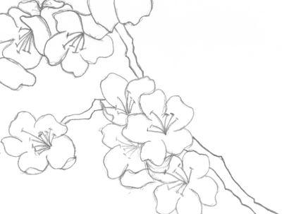 400x303 Drawn Cherry Blossom Flower Petal