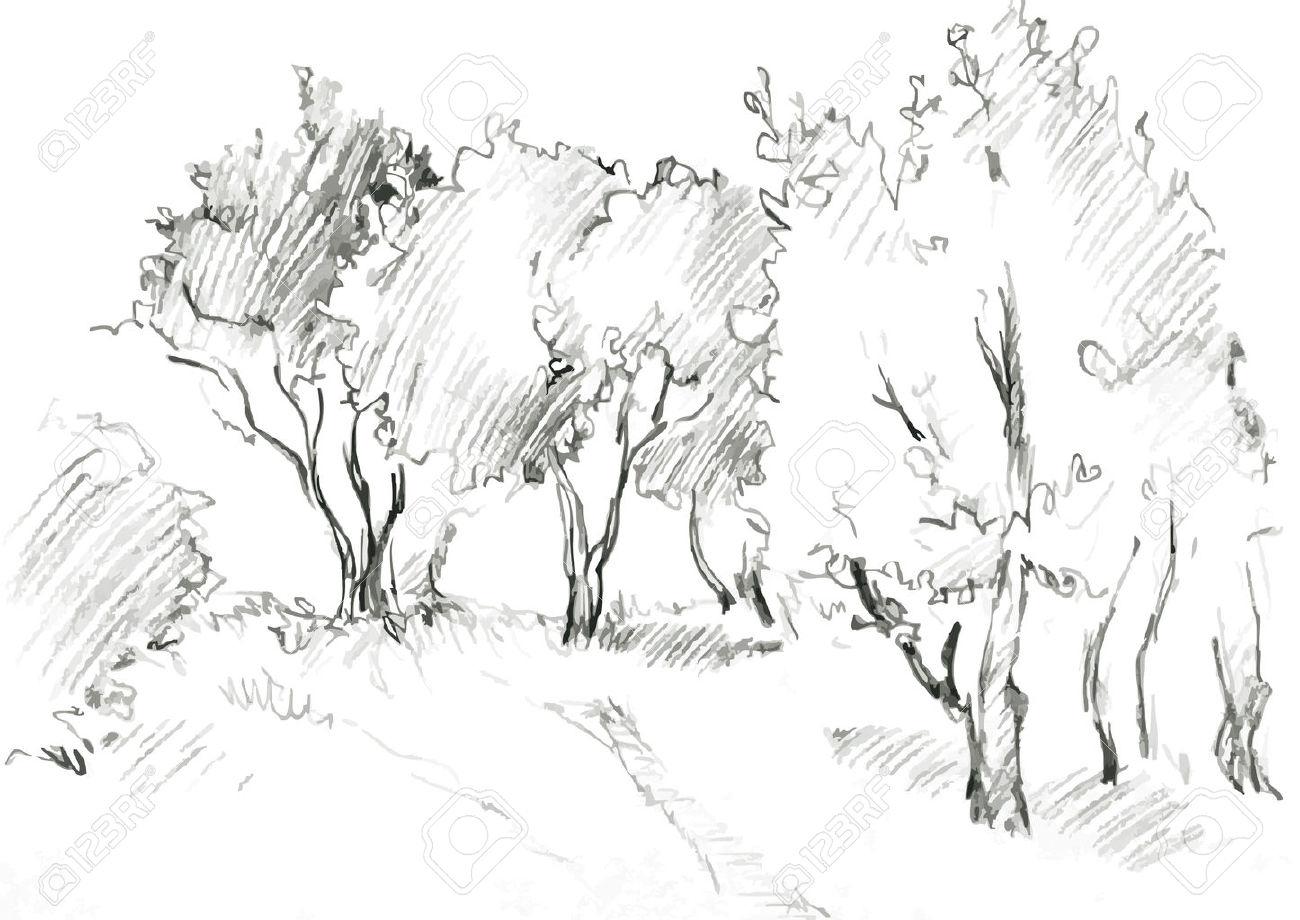 1300x920 Pencil Drawing Of Tree Background Sakura Tree