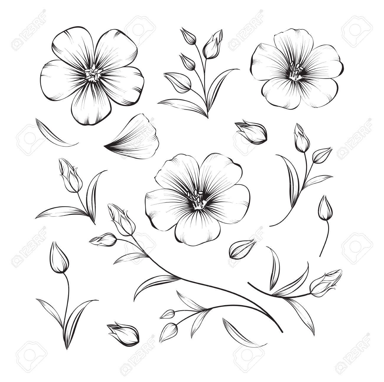 1300x1293 Sakura Flowers Drawing