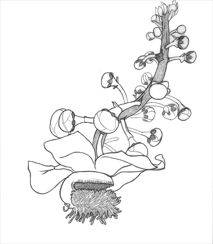 730x837 Flower Drawings, Art Ideas, Sketches Design Trends
