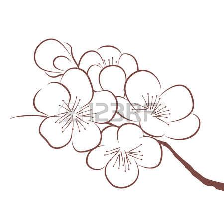 450x450 Ume Blossom Clipart Sketch