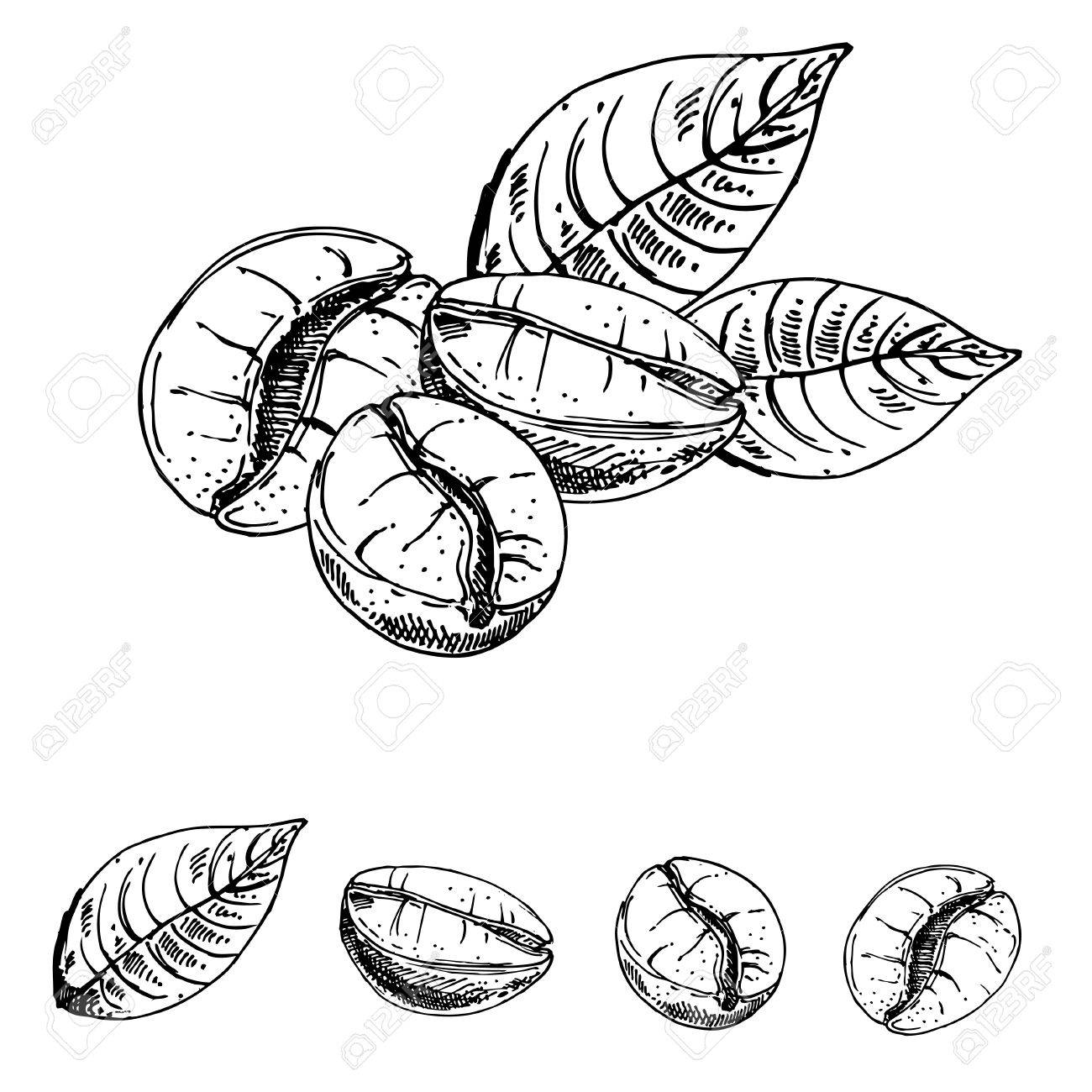 1300x1300 Hand Drawn Ink Coffee Beans, Sketch Of Coffee Beans. Vector Eps
