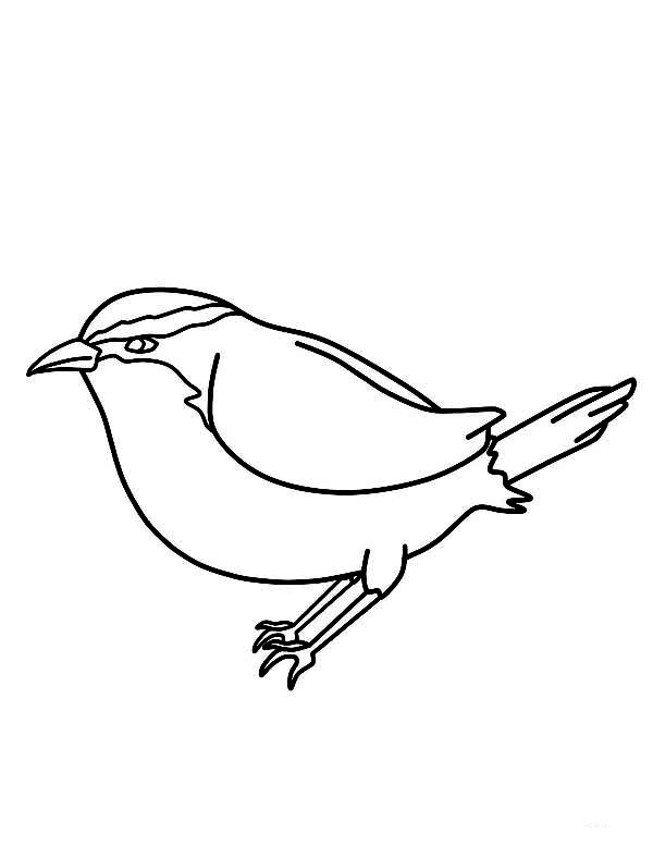 600x776 Kids Drawing Of Chickadee Coloring Page