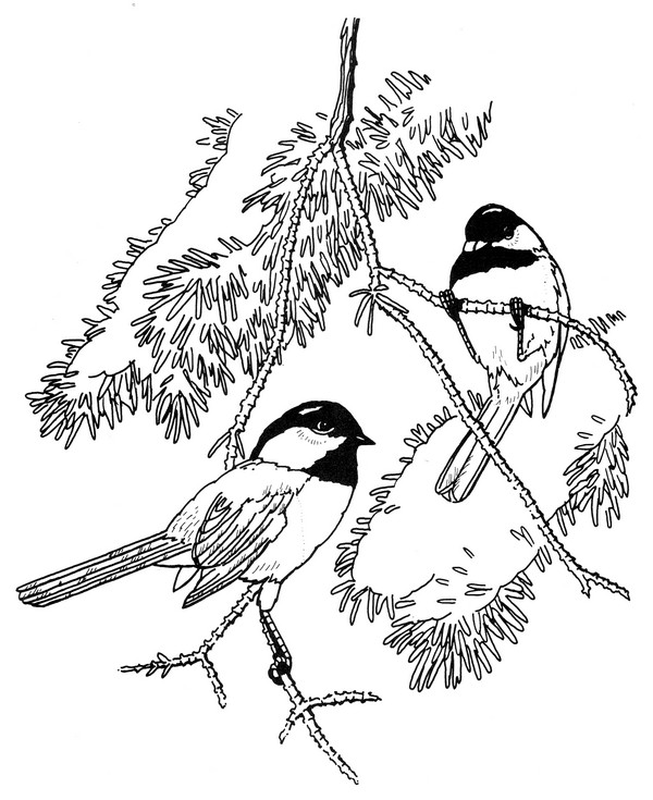 600x735 Black Capped Chickadee Coloring Page CreativeTherapyTools
