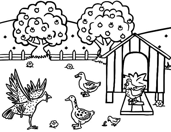 600x464 Chicken Coop Coloring Pages For Kids