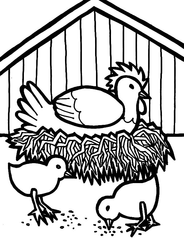 600x776 Hen Hatching Egg In Chicken Coop Coloring Pages