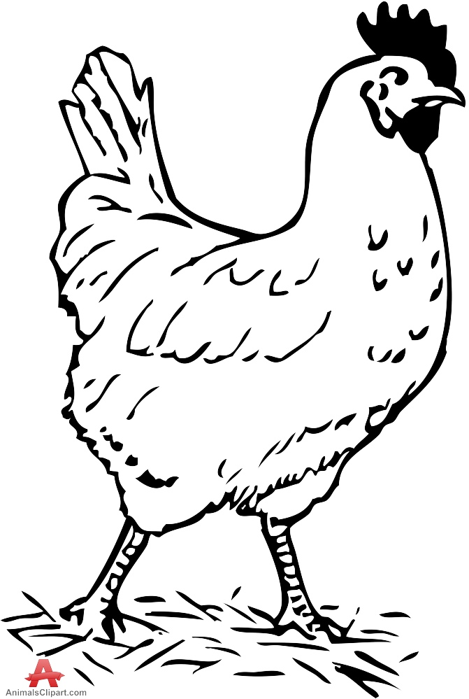 Chicken Head Drawing at GetDrawings   Free download