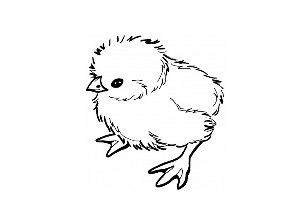 Line Drawing Chicken : Chicken line drawing at getdrawings free for
