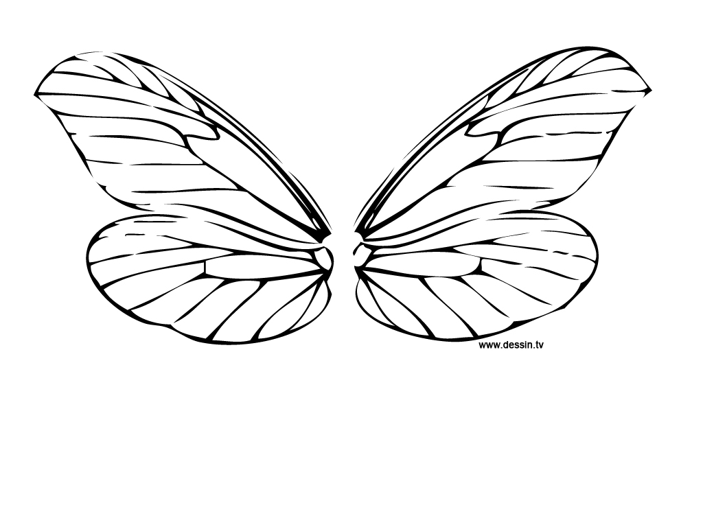 Chicken Wing Drawing At Free For Personal Use Diagram Have Primary Feathers 1024x768 Coloring Dragonfly Wings