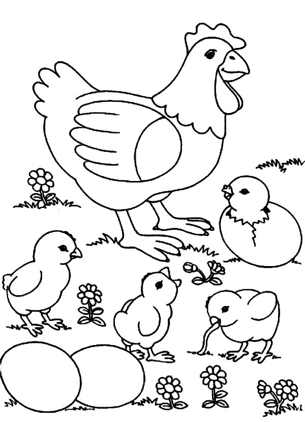 600x828 Chicken Mother And Chicks And Eggs Coloring Pages