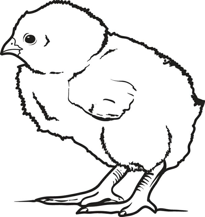 659x700 Free, Printable Little Baby Chick Coloring Page For Kids