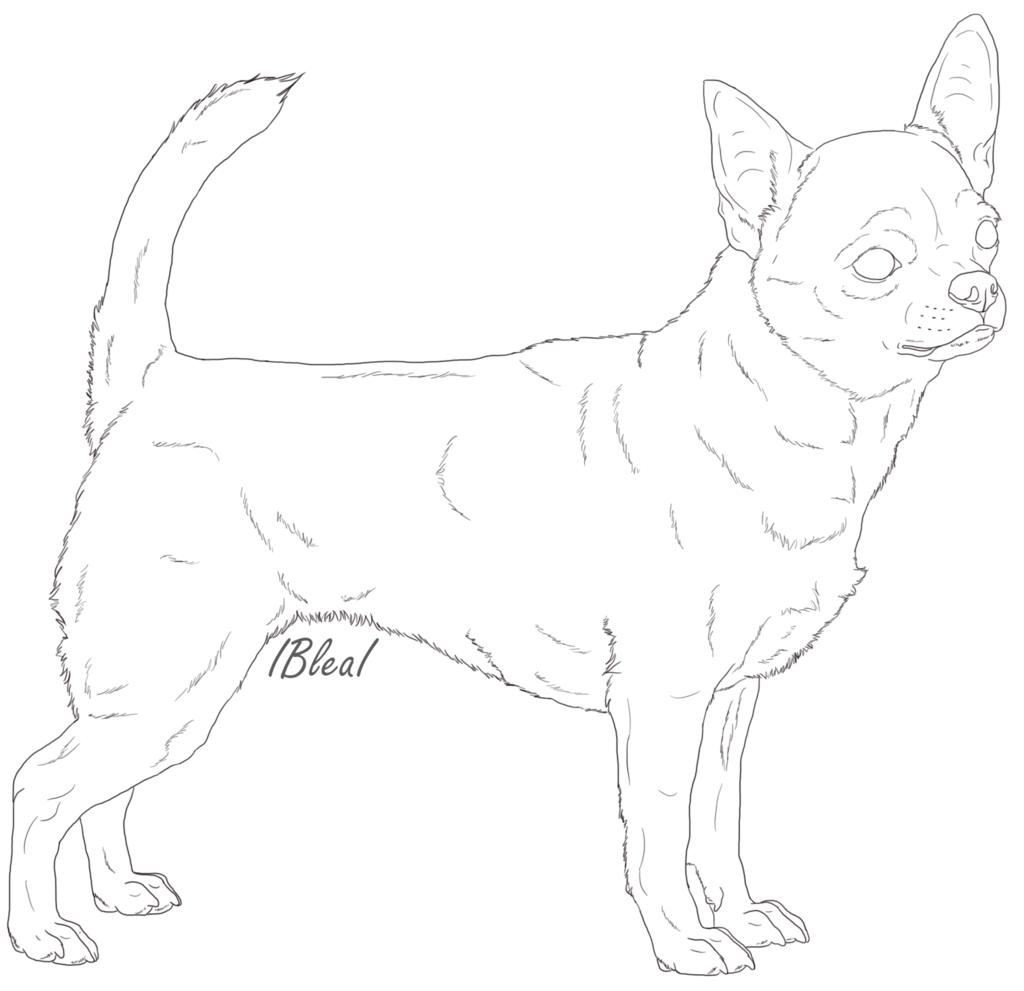 Chihuahua Line Drawing at GetDrawings.com | Free for personal use ...