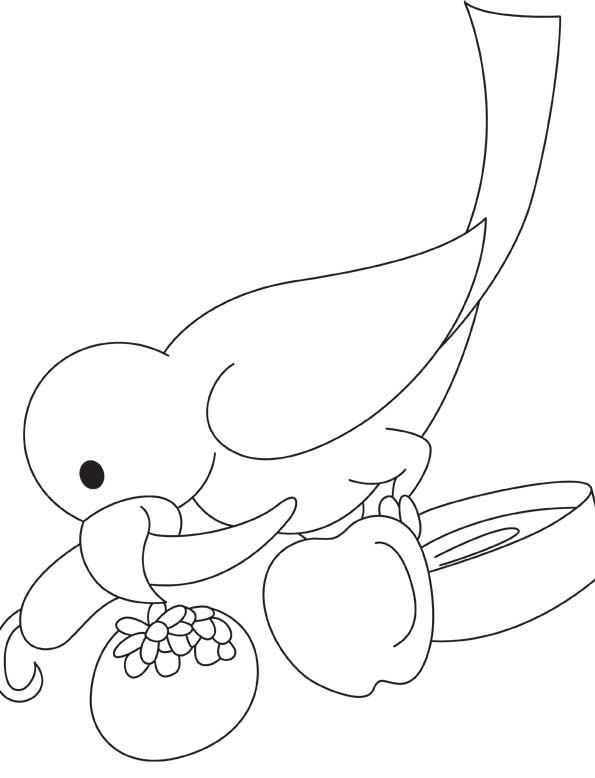 595x778 Parrot Eating Chili Coloring Page Download Free Parrot Eating