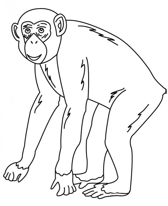 Chimp Drawing at GetDrawings.com   Free for personal use Chimp ...
