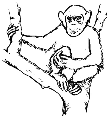350x379 Chimpanzee Coloring Pages To Go With Our Disney Movie