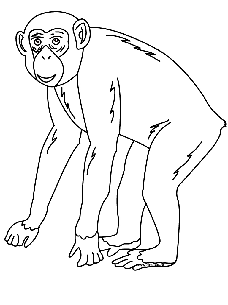 chimpanzee drawing at getdrawings com free for personal use