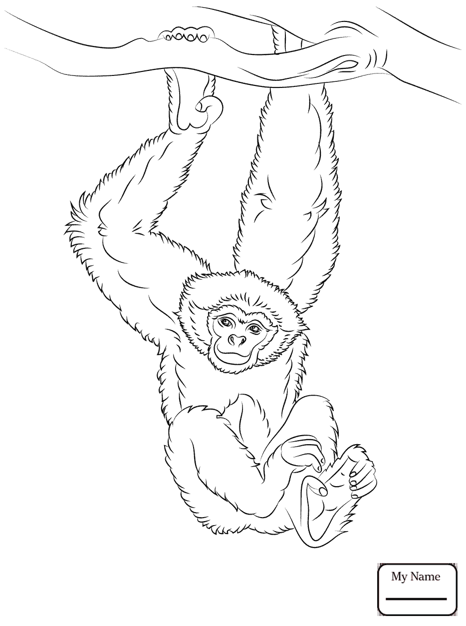 934x1253 Common Chimpanzee Mammals Coloring Pages