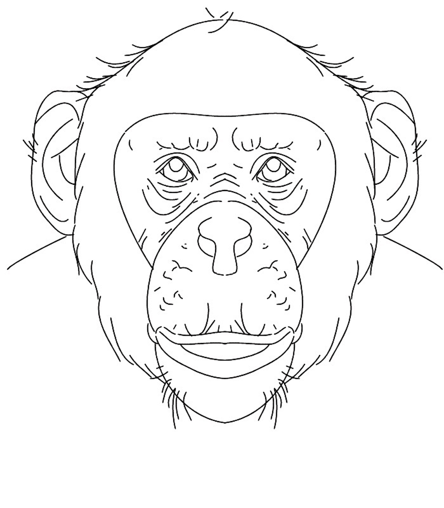 900x1029 Download Chimpanzee Animal Coloring Pages