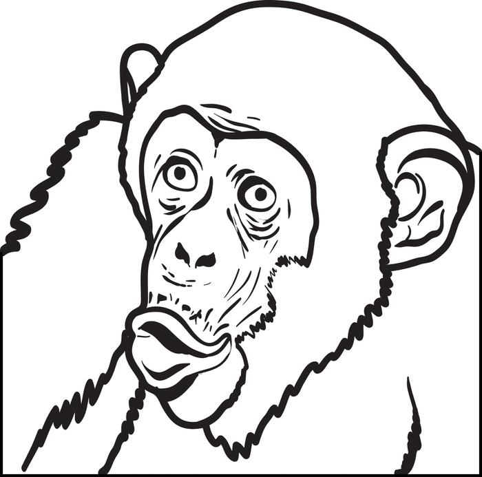 700x693 Free, Printable Chimpanzee Coloring Page For Kids