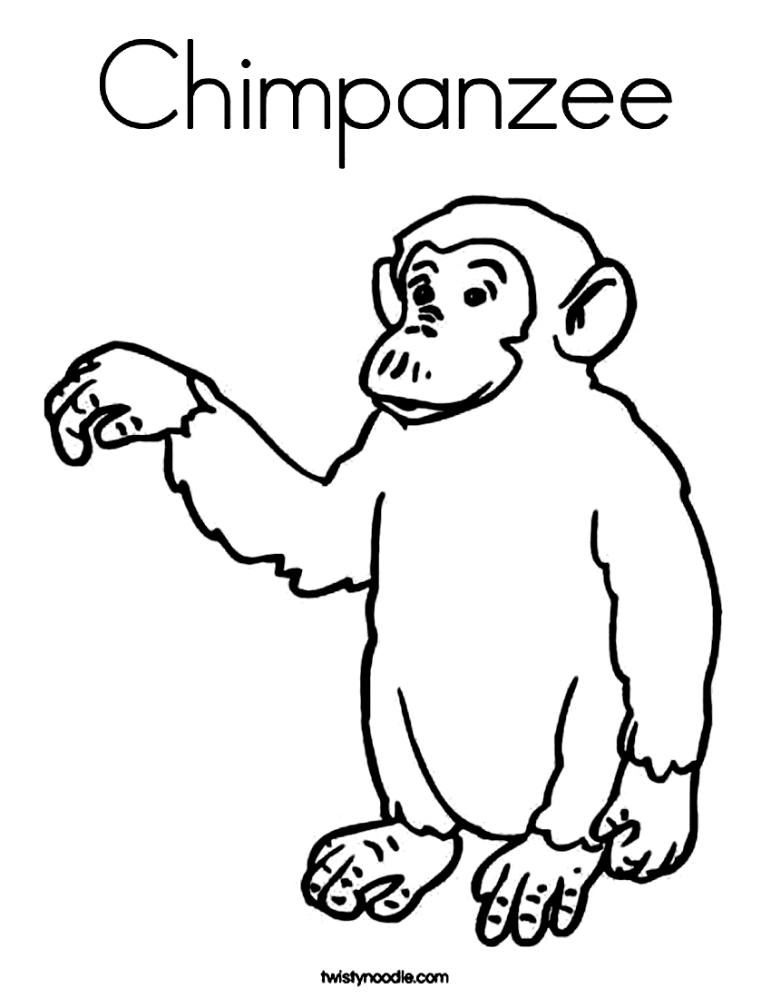 850x1099 Free Printable Chimpanzee Coloring Pages For Kids