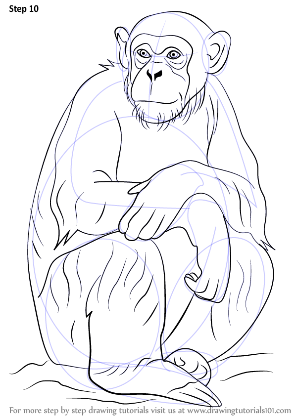 598x844 Learn How To Draw A Chimpanzee (Other Animals) Step By Step