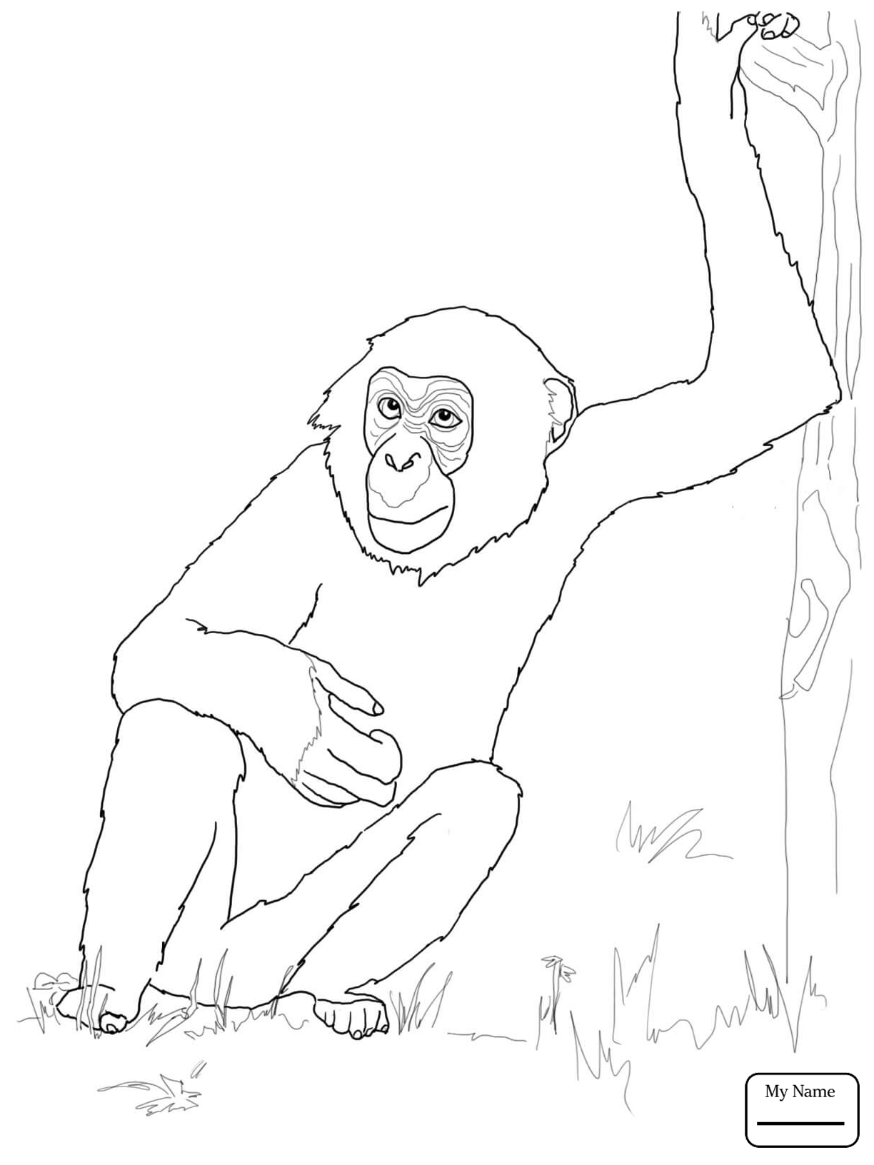 1224x1632 Chimpanzee African Chimpanzee Mammals Coloring Pages