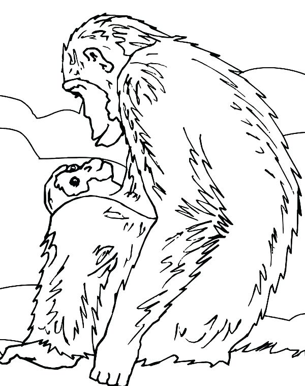 600x758 Chimpanzee Coloring Page Omnitutor.co