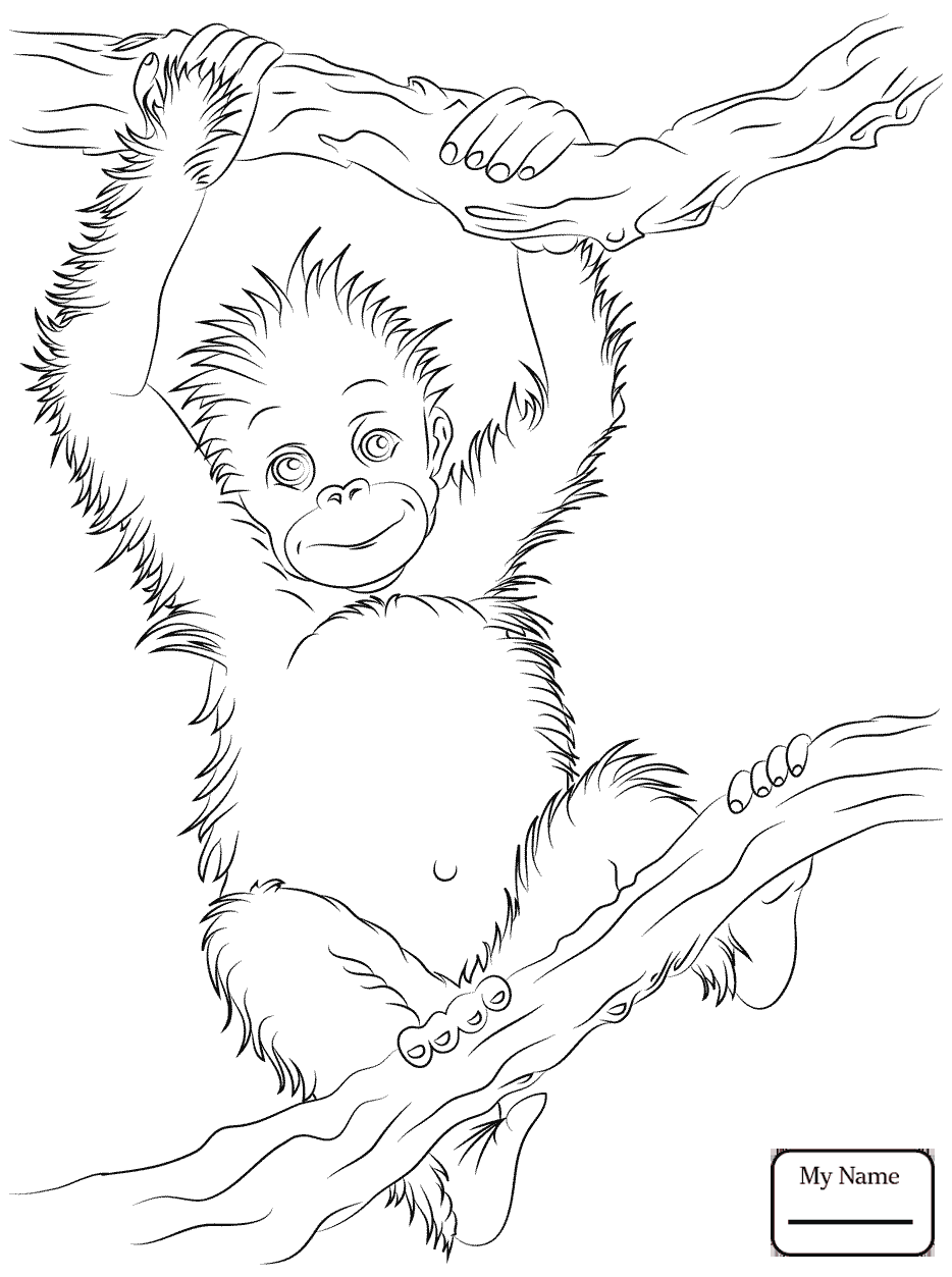 934x1253 Coloring Pages For Kids Mammals Chimpanzee Cartoon Apes