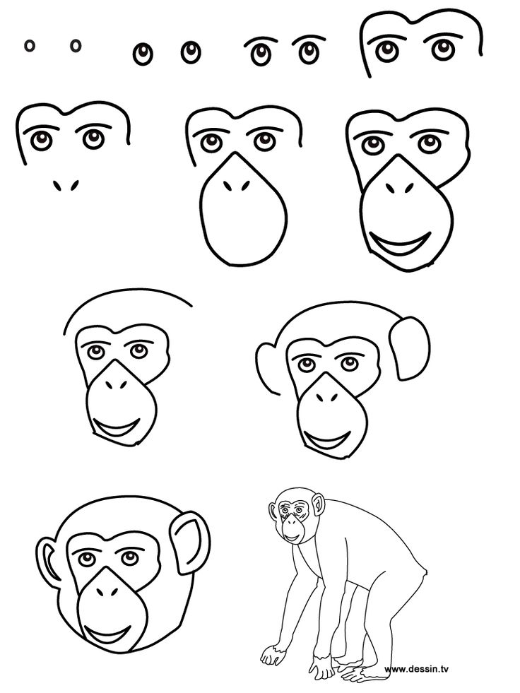 736x981 Drawing Chimpanzee Dessiner Chimpanzee And Drawings