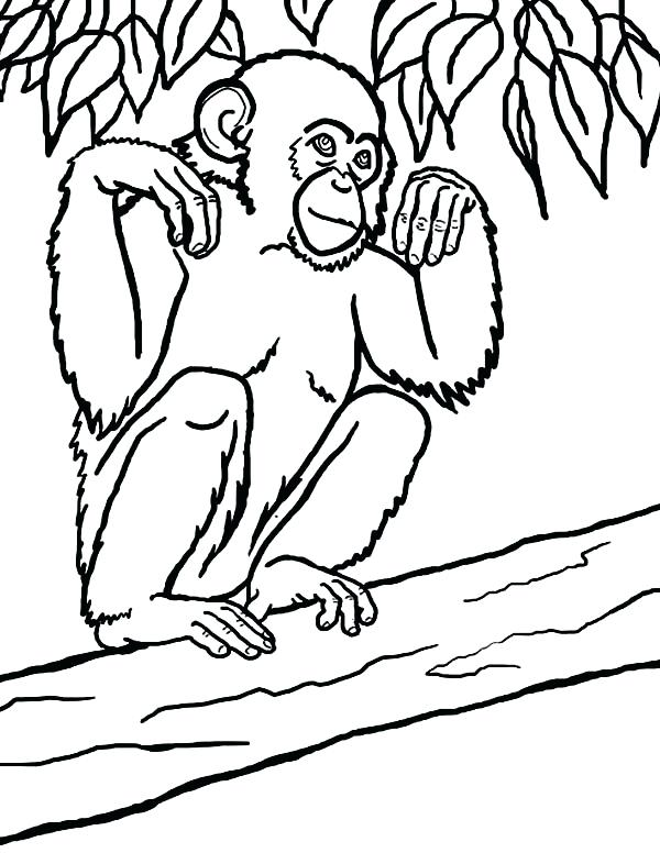 600x776 Chimpanzee Coloring Book For Good Draw Page Free Pages Baby