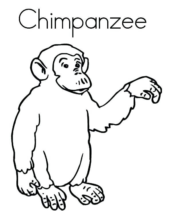600x776 Chimpanzee Coloring Book Printable In Beatiful Draw Print Pages C