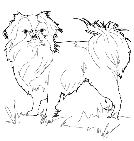 456x480 Japanese Chin Coloring Page Free Printable Coloring Pages