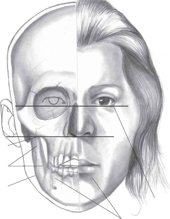 566x728 The Structure Of The Head