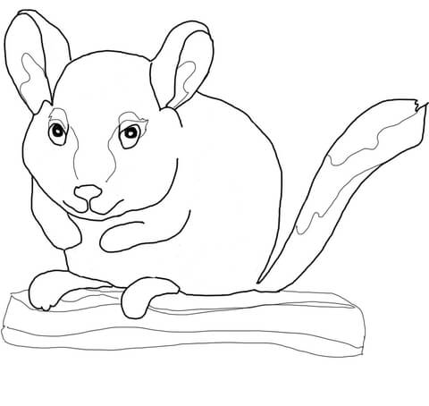 480x454 Chinchilla Sits On Branch Coloring Page Free Printable Coloring