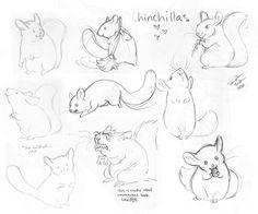 236x196 Chinchilla Illustrations Drawings Chinchillas