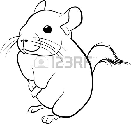 450x426 Cute Chinchilla Line Art. Black Line Illustration Royalty Free