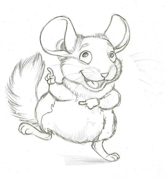 564x610 Cute Chinchilla Drawing. Small, Furry Thing.
