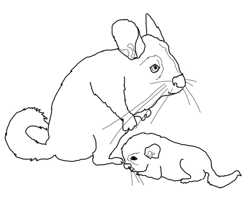 480x413 Mother And Baby Chinchilla Coloring Page Free Printable Coloring