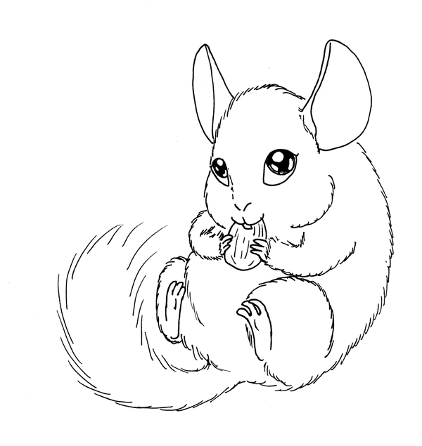 coloring pages chinchillas | Chinchilla Drawing at GetDrawings.com | Free for personal ...