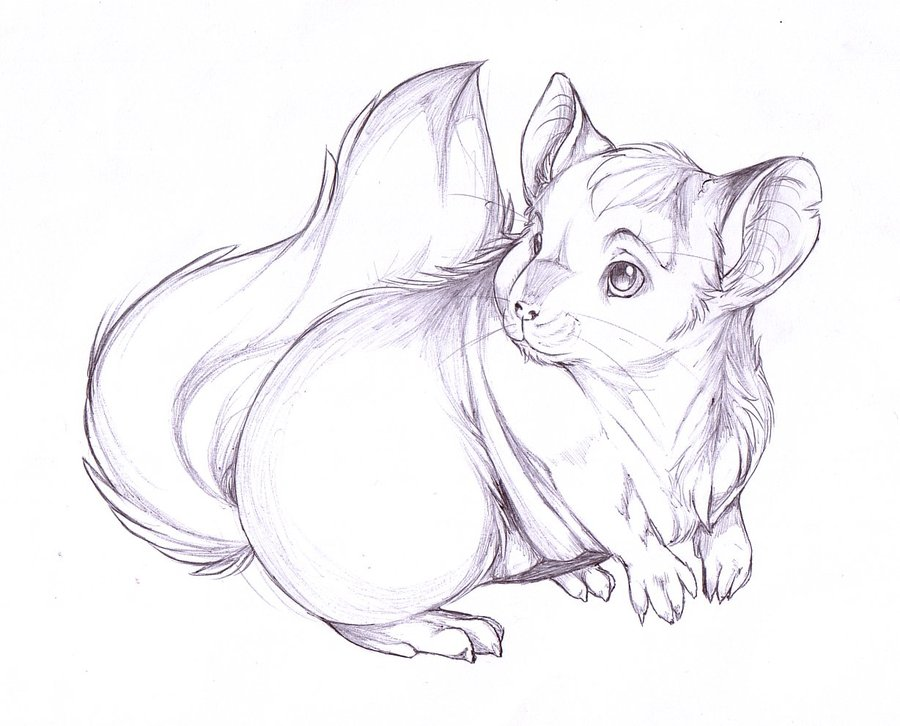 900x726 Chinchilla Pen Sketch By Chinchillatwork