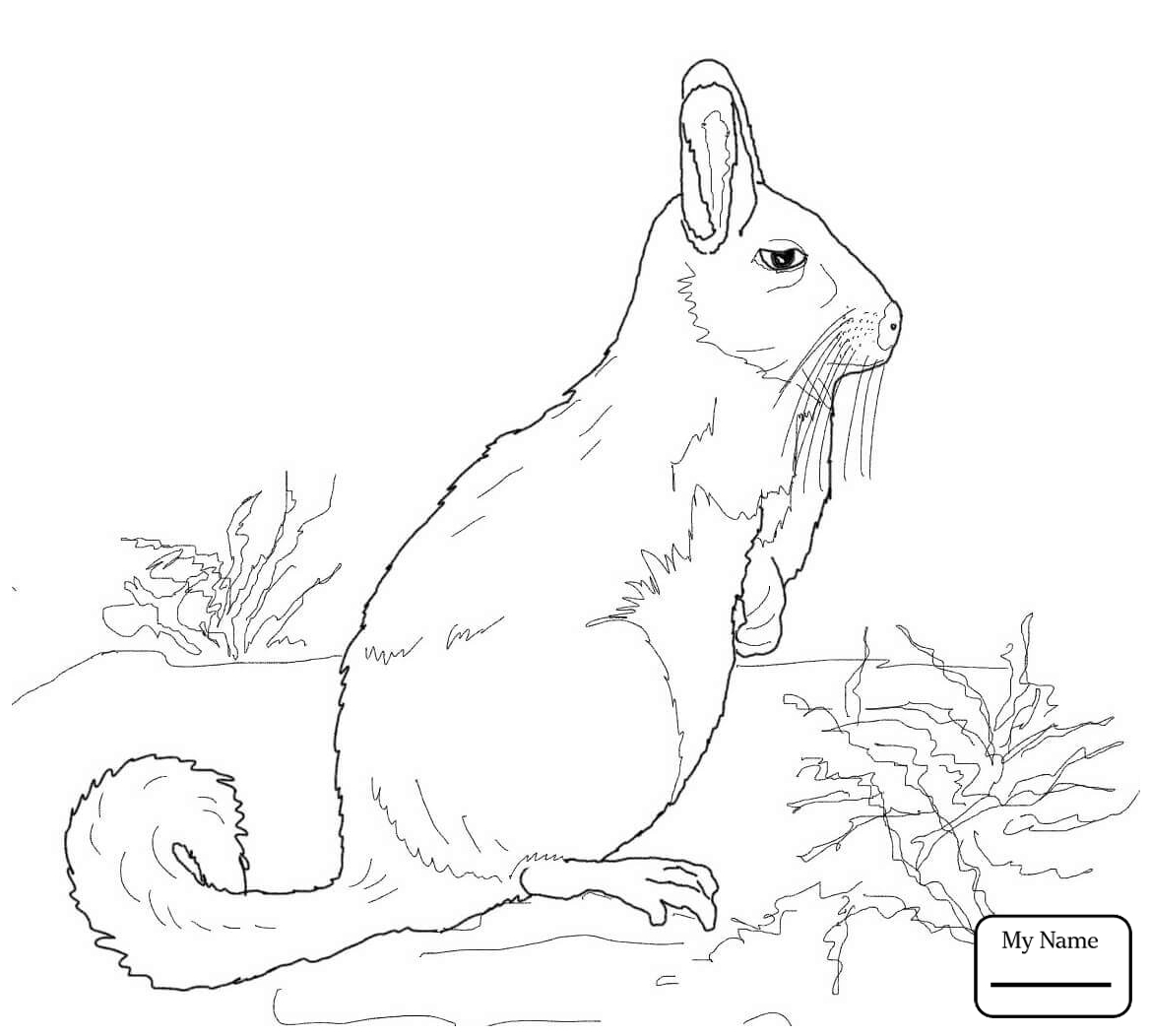 1169x1052 Coloring Pages Cute Chinchilla Mammals