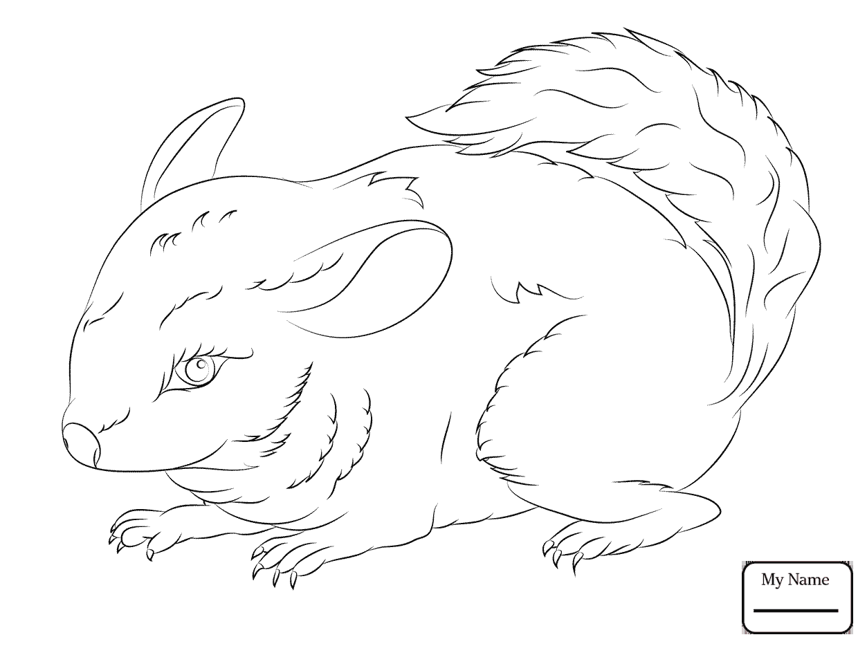 1253x934 Coloring Pages For Kids Mammals Chinchillas Chinchilla