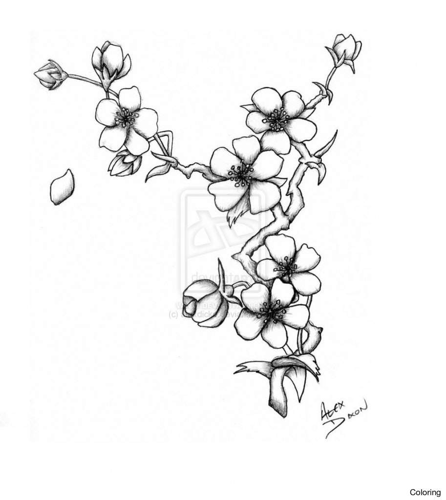 913x1024 Cherry Blossom Tree Drawing Best Images Collections Hd For Gadget