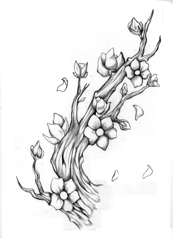 600x826 Drawn Sakura Blossom Almond Tree